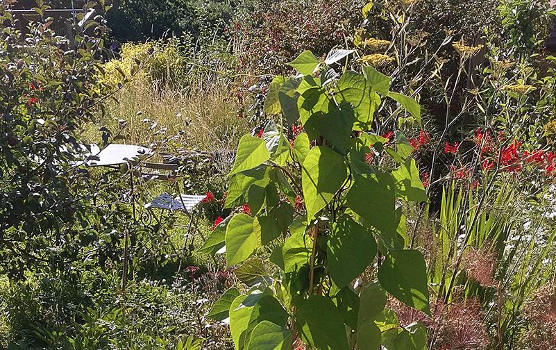 edible and ornamental planting
